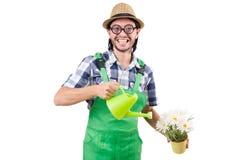 Den roliga trädgårdsmästaren med att bevattna kan isolerat Fotografering för Bildbyråer