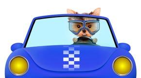 Den roliga valpen i cabrioleten med flygaren rullar med ögonen Royaltyfri Foto