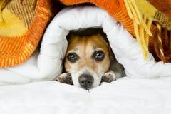 Den roliga vila hunden tystar ned Royaltyfri Bild