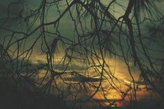 Den romantiska solnedgången beskådade bakifrån ett barrträd Arkivfoton