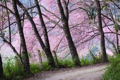 Den rosa atmosfären Arkivfoto