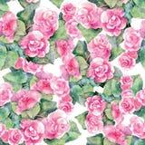 Den rosa begoniablomman, vattenfärg, mönstrar sömlöst Arkivbilder