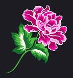 Den rosa blomman ställde in 1 Vektor Illustrationer