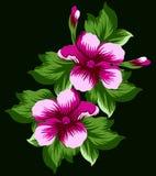 Den rosa blomman ställde in 6 Stock Illustrationer