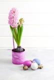 Den rosa hyacinten och easter ägg på grå färger hårdnar bakgrund Royaltyfri Foto