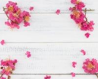 Den rosa kräppmyrten blommar på vitt trä Royaltyfri Bild