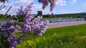 Den rosa lilan i parkerar att förbise floden lager videofilmer