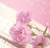 Den rosa nejlikan blommar på den lantliga vita trätabellen Royaltyfria Foton