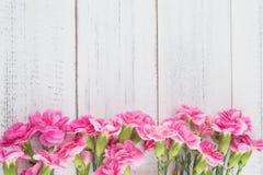 Den rosa nejlikan blommar på vitt trä Fotografering för Bildbyråer