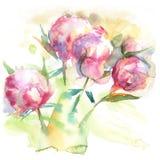 Den rosa pionen blommar vattenfärgteckningen Royaltyfria Foton