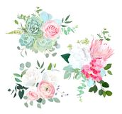 Den rosa proteaen, ranunculus, steg, den vita vanliga hortensian, kärnad ur eucalyptu royaltyfri illustrationer