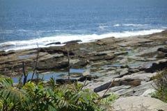 Den Rosa rugosaen, havet steg, innan det blommade, med havsprej i bakgrund arkivfoton