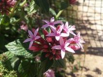 Den rosa trädgården gjorde in royaltyfria foton