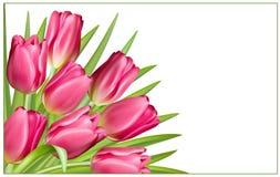 Gåvan inramar med rosa tulpan Royaltyfri Bild