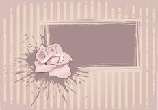 den rosa vykortet steg Royaltyfria Foton