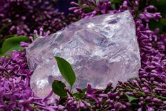 Den Rose Quartz f?r ?delstenkvalitetsbusen stora biten fr?n Madagascar omgav vid den purpurf?rgade lila blomman arkivfoto