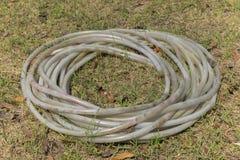 Den Rubber slangen hålls i rund form på jordningen Arkivbild