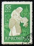 Den rumänska portostämpeln visar kvinnan som ansar vinrankan Cotnari, circa 1960 Arkivbild