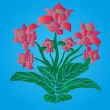 Den rummång--stammen blomman av rosa färger färgar, på en blå bakgrund, Arkivbild