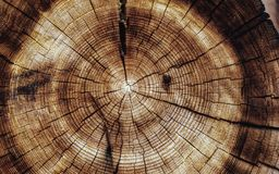 Den runda journalen med den naturliga runda strukturen av trädet och radiella sprickor, bakgrund klippte naturligt trä Arkivfoton