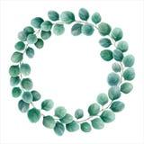 Den runda kransen av eukalyptuns förgrena sig silverdollaren Vattenfärg ve Royaltyfri Bild