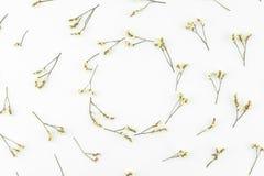 Den runda kransen som göras från gul limoniumcaspia, blommar Royaltyfri Bild
