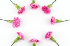 Den runda rosa nejlikan blommar kransen Royaltyfri Fotografi
