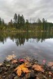 Den runda sjön på Lacamas parkerar i nedgång Royaltyfri Bild
