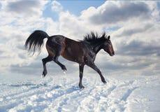 Den ryska travaren jublar snö Fotografering för Bildbyråer