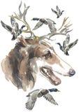 Den ryska vinthunden, designer för jägarehundkapplöpningkortet, den redigerbara logoen, kan du skriva in din logo eller text Royaltyfri Foto