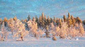 Den sömlösa öglan - snöa att falla på ett vinterskoglandskap, Saariselka, Lapland, Finland, videoen HD stock video