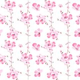 Den sömlösa modellen av vattenfärgillustrationen av rosa sakura blomstrar Royaltyfri Bild