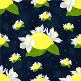 Den sömlösa modellen med citronen bär frukt, och citronen blommar på mörk bakgrund Arkivfoton