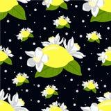 Den sömlösa modellen med citronen bär frukt, och citronen blommar på svart bakgrund Royaltyfri Fotografi