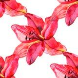 Den sömlösa modellen med färgrika liljor blommar på vit bakgrund uppsättning av att blomma som är blom- för att gifta sig inbjudn Fotografering för Bildbyråer