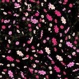 Den sömlösa modellen med lös sommar blommar på svart bakgrund som är redigerbar Royaltyfri Bild