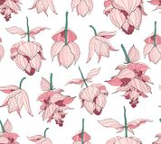 Den sömlösa modellen, medinillaen magnifica blommar på vita röda och vitsignaler för bakgrund, för rosa färger, Royaltyfri Bild