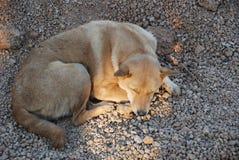 Den sömniga tillfälliga hunden lägger på jordningen royaltyfri bild