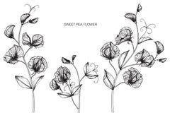 Den söta ärtan blommar teckningen och skissar med linje-konst Arkivfoto