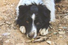 Den söta ögonhunden ser kameran royaltyfria foton