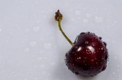 Den söta körsbäret är under droppregn Royaltyfri Fotografi