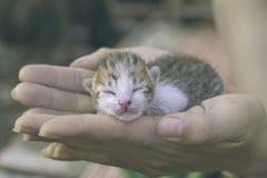 Den söta kattungen som tar en ta sig en tupplur, den älskvärda katten, behandla som ett barn på handen Arkivbilder