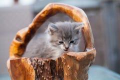 Den söta lilla kattungen sitter i den wood korgen royaltyfri foto