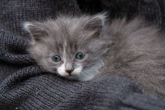 Den söta lilla kattungen sitter på handen fotografering för bildbyråer