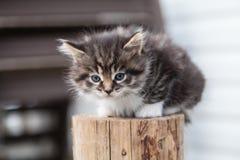 Den söta lilla kattungen sitter på trädgården royaltyfria bilder