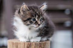 Den söta lilla kattungen sitter på trät arkivfoton