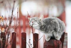 Den söta strimmig kattkatten smekte på en filial i vår på ett staket i royaltyfri fotografi