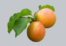 Den saftiga fruktaprikons på en grå fone Royaltyfri Foto