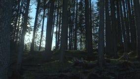 Den sagolika skogen som trängs igenom av solen, strålar att kalla för affärsföretag, härlig natur lager videofilmer