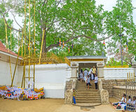 Den sakrala fikonträdet i Anuradhapura Royaltyfri Fotografi